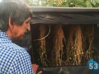 Боровичский фермер Иван Гелетей показал  «53 новостям» завораживающую воздушную картошку