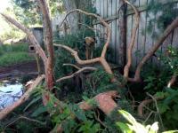 Боровичский приют для животных «Найда» пострадал от урагана
