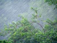 Ливневые дожди и сильный ветер сулят синоптики жителям Новгородской области