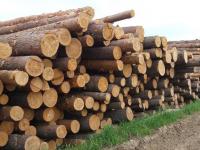 Молодым учителям и многодетным семьям будут выделять 200 кубов леса на строительство жилья