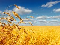 Новгородская область и Россельхозбанк подписали соглашение о сотрудничестве