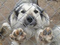 Новгородцы просят областное правительство создать приют для бездомных животных