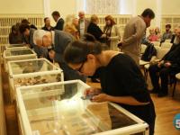 От бересты до шахмат: новгородские археологи подвели итоги уходящего сезона