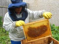 «Работа на пасеке – целая наука»: в боровичской колонии собрали первый урожай меда