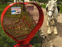 Сегодня в трех местах Великого Новгорода появятся сердца