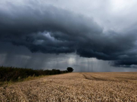 АПК Новгородской области столкнулся с большими проблемами из-за дождливого лета