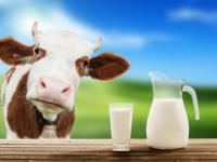 В Чудовском районе скоро достроят «самую современную в области» молочную ферму