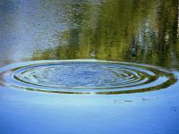 В водоемах Новгородской области ищут холеру