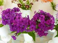 В Великом Новгороде флоксы и лилии ждут своих зрителей и новый дом