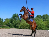 В Великом Новгороде создадут Центр казачьей джигитовки