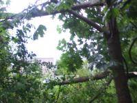 Валдайцы жалуются, что в городе не могут ликвидировать последствия урагана