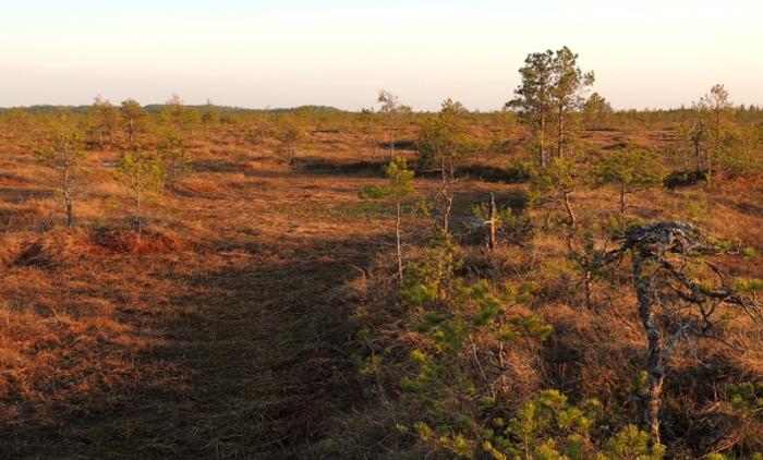 В Новгородской области ученые обсудят состояние заповедных территорий