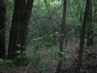 Более 30 волонтеров до прихода темноты искали пропавшую в новгородских лесах старушку