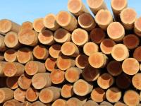 Лесопромышленник из Малой Вишеры избежал уголовного дела, заплатив налоги во время следствия