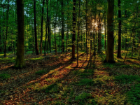 Новгородские спасатели напоминают о «законах леса» всем любителям выйти по грибы да по ягоды