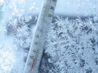 Новгородским садоводам предложили для спасения урожая от мороза использовать мат