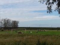 В преддверии Дня лося парфинские коровы вышли на футбольное поле