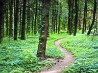 В Тверской и Новгородской областях разыскивают грибника, пропавшего в 2005 году