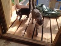 В Витославлицах за реставрационными работами следят коты-трудоголики