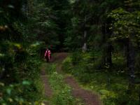 «53 новости» прошли по валдайской экологической тропе «Лесные тайны»