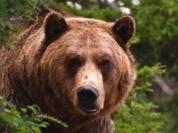 За убийство цыплят пестовского медведя приговорили к смертной казни