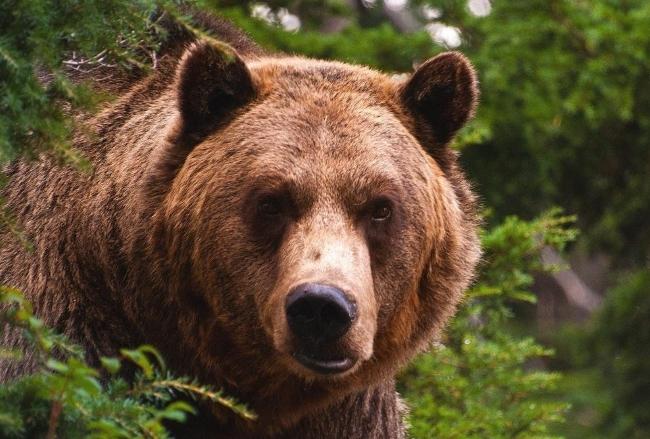 В Любытинском районе объявлена охота на ведающего мёд