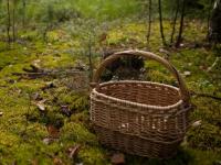27 удивительно беспечных потеряшек заблудились в этом году в маловишерских лесах