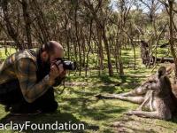 Фотофакт: Николай Миклухо-Маклай познакомился с кенгуру