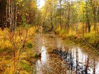 Грибник из Санкт-Петербурга пропал в маловишерских болотах