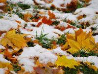 К выходным в Новгородской области похолодает
