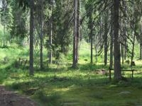 В Новгородской области будут охранять муравьиный мегаполис