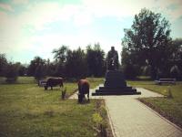 В Старой Руссе никто не ожидал, что коровы отведают газон Достоевского