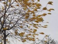 Великому Новгороду и области синоптики сулят сильные ветра на весь день