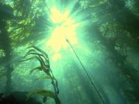 70 га водной растительности выкошено в пойме Мсты