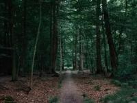 Пропавшего вчера мужчину в Новгородском районе наконец-то вывели из лесов