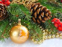 Старая Русса купила к Новому году «Альпийскую» ель