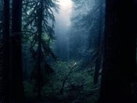 В новгородских лесах второй день ищут мужчину, который любит устраивать походы за клюквой