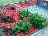Вандалы ограбили мемориал жертвам авиакатастрофы над Синаем «Сад памяти»