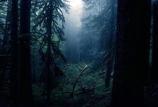 В чудовском лесу нашли труп женщины, выходившей на связь 16 сентября