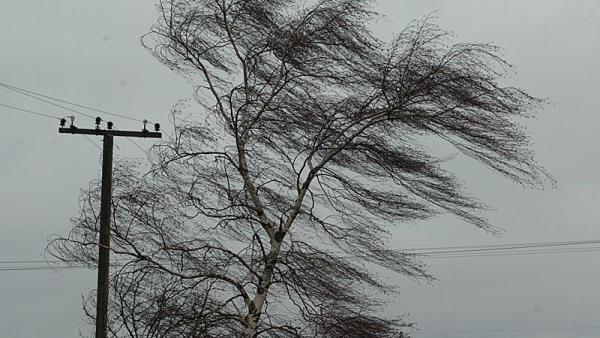 Новгородские синоптики предупреждают об усилении ветра