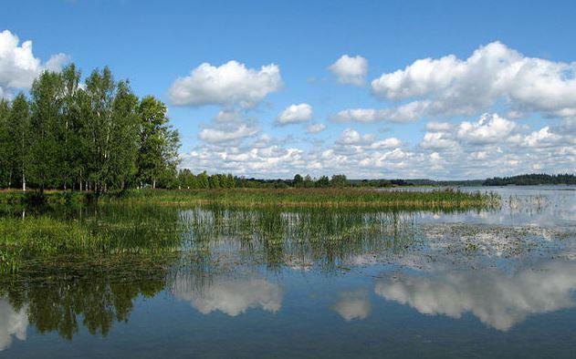 Новгородской области необходима поддержка Минприроды для решения экологических проблем