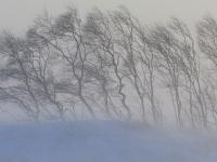 Более тысячи жителей Новгородской области остались без света