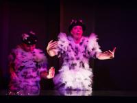 Новгородское «Лебединое озеро» признано лучшим театральным экспериментом на фестивале в Питере