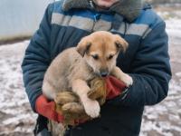 Пять щенков на Рюриковом городище надеются найти хозяев