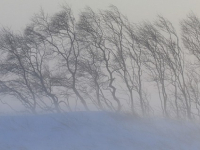 Синоптики: Новгородскую область продолжит заметать снегом