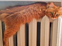 В Валдае устранены утечки на тепловых сетях