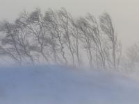 В Великом Новгороде 8 декабря ожидается сильная метель