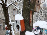 Валдайский национальный парк призывает следить за птицами до начала весны