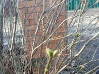 Фотофакт: в Валдай пришла весна