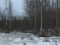 В Шимском районе умирает лесной массив